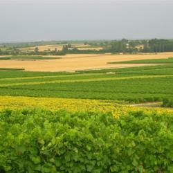 Juillet en Charente-Maritime